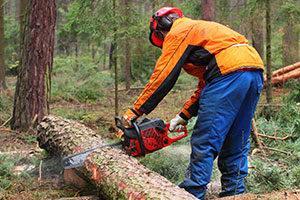 forestry technician worker